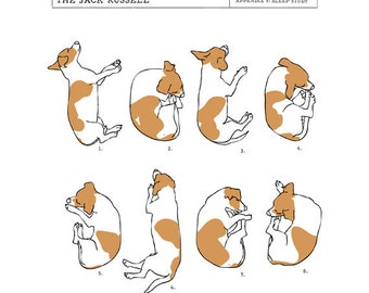 Jack Russell Sleep Study Art Print. Illustrations of a dog's sleeping postions