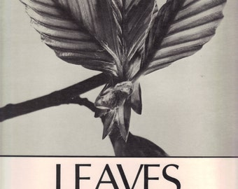 Leaves 199 Art Photographs by Andreas Feininger with text on types of leaves