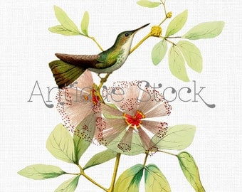 Bird Clipart 'White bellied Emerald' Hummingbird Download 1877 for Scrapbooking, Collages, Crafts, Invites, Cards, Wall Art...