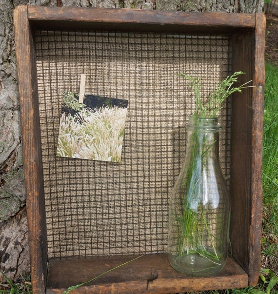 Shadow Box with Chicken Wire.