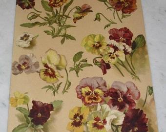 Antique Victorian Pansy Print ~ Patty Thum ~ 1894