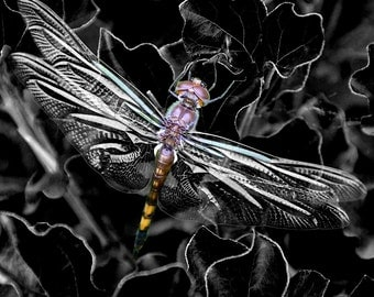 Art Print B&W Photograph of a Dragonfly
