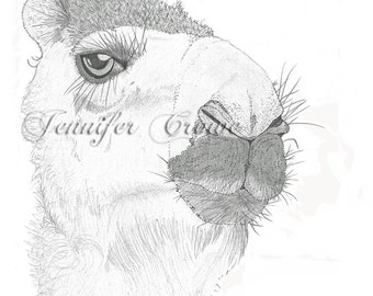 "Giclee Print: ""Camel Aught"" Pencil Illustration"