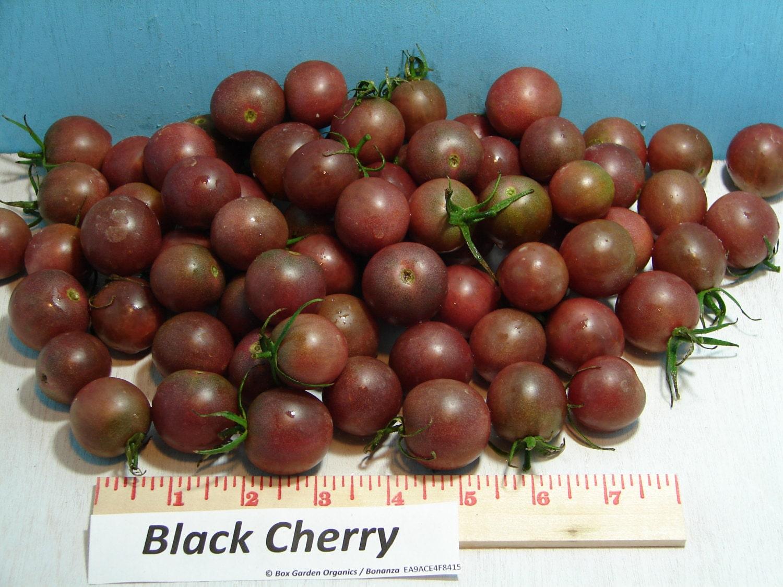 black cherry heirloom tomato seeds organic by boxgardenorganics. Black Bedroom Furniture Sets. Home Design Ideas