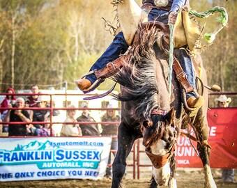 Ride 'em Cowboy rodeo cowboy saddlebronc horses equine equestrian rodeo art
