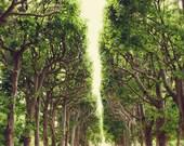 Paris Print, Trees, Nature, Dreamy, Symmetry, Rustic, Beige, Emerald Green, Shabby Chic, Jardin des Plantes, Spring Decor, France, Forest