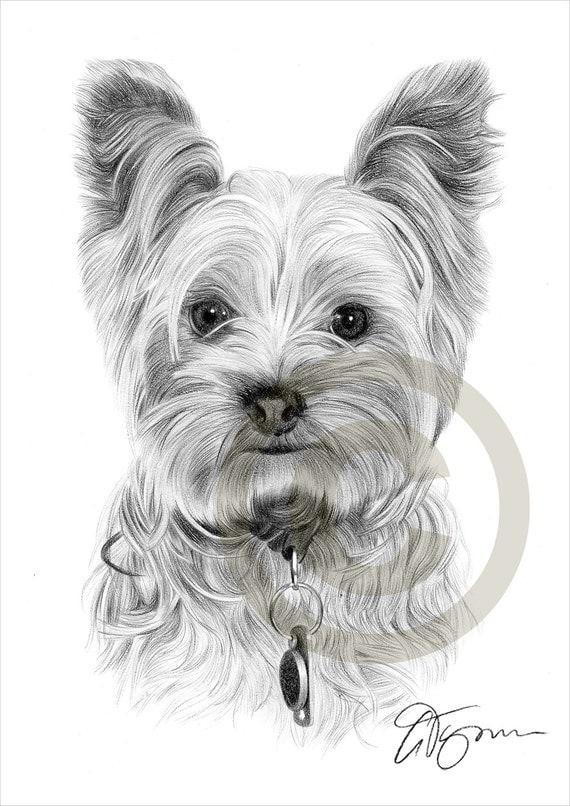 Crayon de chien yorkshire terrier toy dessin imprimer - Dessiner un yorkshire ...