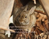 Rabbit print wall decor digital download animal photo outdoor photography wildlife stock