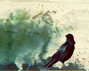 Altered Crow Photo - 5x7 Inch