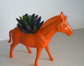 Orange Zebra Planter Ready to Plant and Display at Work or Home