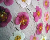 Real Pressed Flowers by Petal Annie (Loose) -  20 Rock Rose - For Your Art Project - Flowers shown are an example