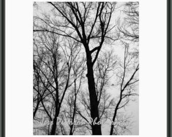 Abstract Winter Tree photography. Black and White Home Decor. Georgia Tree branch Print. nature wall art Gray Black decor 8x10, 5x7 matted