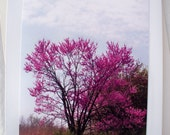 Photo Card Redbud Tree on Edge of Lake