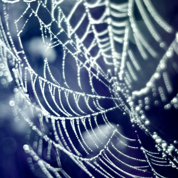 Spider web, navy blue, ice, winter, indigo, water droplets, black, frost, bokeh, simple home decor - Diamonds 8x8