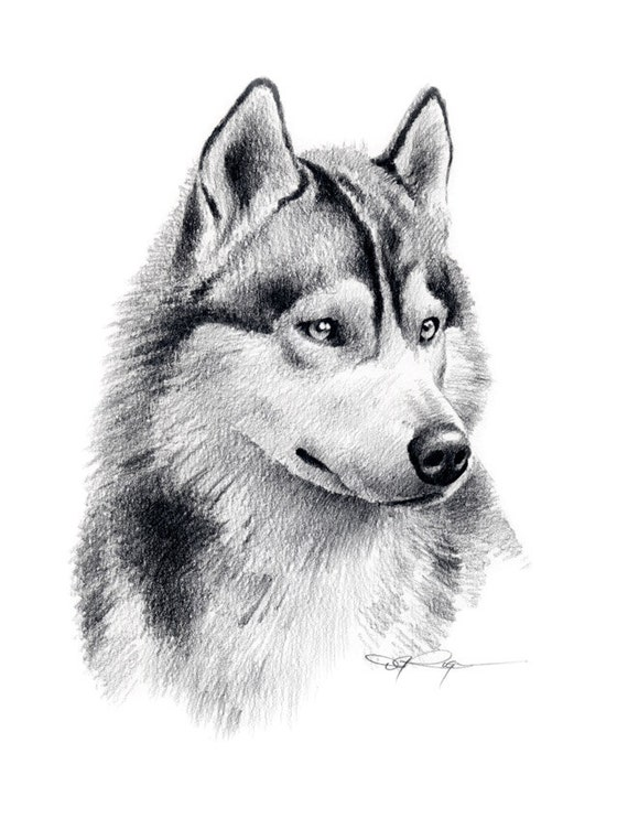 Siberian Husky Art Print Pencil Drawing Signed By Artist Dj