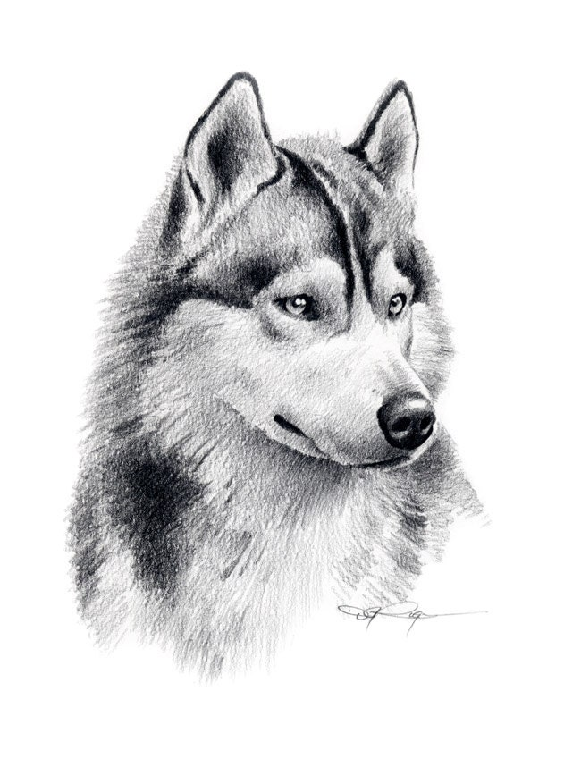 How To Draw A Siberian Husky Apps Directories