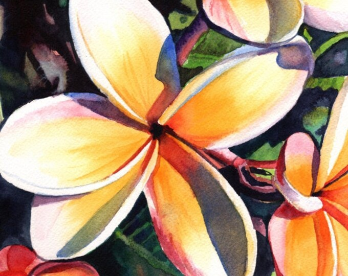 Kauai Rainbow Plumeria 5x7 art print from Kauai Hawaii yellow orange frangipani