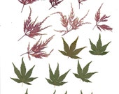 Thios digital sheet is a page of pressed red and green leaves