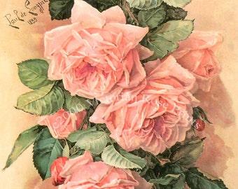 Pink Cabbage Roses Print Paul de Longpre A Bunch of Beauties Half Yard Long