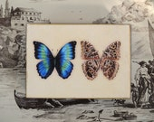 Original Illustration Morpho Butterfly Art Print on a Wood Block 5x7 nature design home decor