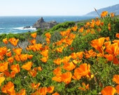 Custom for Erika-California Poppies at Big Sur-Print-Fine Art Photo Print- California Coast- California Poppies
