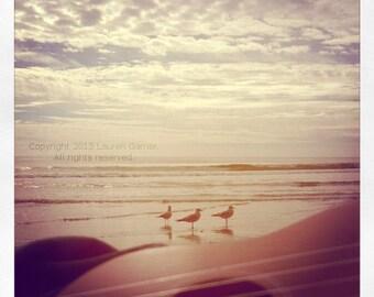 Three Little Birds - Ukulele Beach Summer Music Nautical Vacation Seagull Guitar Photography Wall Hanging Decor - 8x8 Photograph