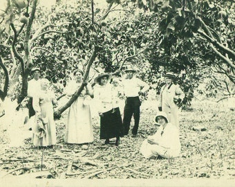 Family Standing Under The Orange Trees Picking Fruit Orchard Farm Southern RPPC Real Photo Postcard Antique Black White Photo Photograph