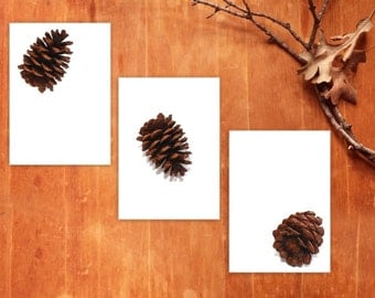 Tumbling Pine Cones, triptych prints, fine art photography, rustic home decor, cabin art, woodland forest, nature photos, pine cone art