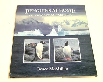 Penguins At Home, Gentoos Of Antartica By Bruce McMillan
