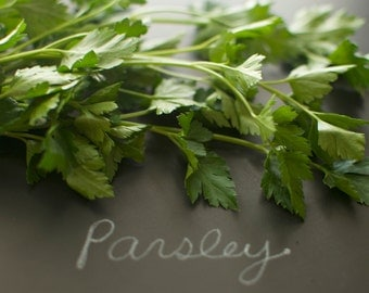 Organic Italian Dark Green Flat Leaved Parsley Seeds