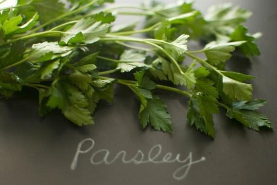 Organic Italian Dark Green Flat Leaved Parsley Seeds