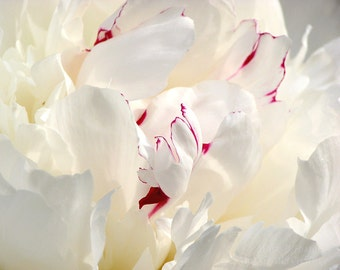 Soft White Peony Flower Photography dreamy photograph romantic cottage chic home decor abstract macro floral wall art 7x5 10x8 14x11