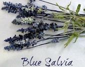Blue Salvia, Dry Flowers, Stems, Flower Stems, Wedding, Bouquet, Wreath Making, Supplies, Crafts, Floral, Blue Flowers, Table Decor, Wreath