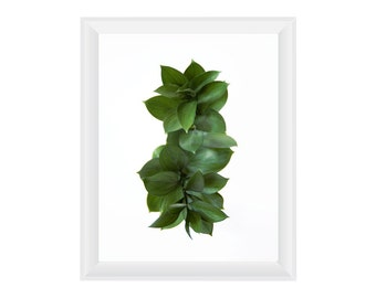 Foliage N3. 8.5x11. Fine Art Photographic Natural History Print. Minimalist. Natural Home Decor. Indoor garden botanical.