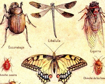 Insects 1930 Spanish dictionary plate butterfly beetle digital image Instant Download printable 170