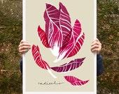 "Radicchio Vegetable Poster print  20""x27"" - archival fine art giclée print"
