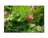 Leaf Print Autumn Fall Photography Grass Green Red Leaf