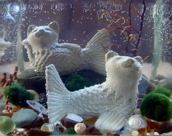 Live Marimo Balls and MerCat Katfish Cat Mermaids Terrarium
