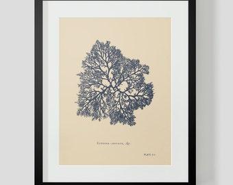 Vintage Coral Ocean Life Print 2 NAVY COLOR