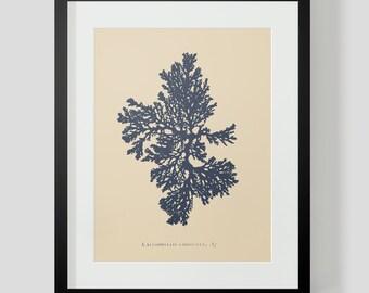 Vintage Coral Ocean Life Print 4 NAVY COLOR