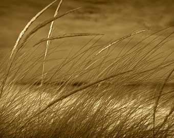Beach Grass on a Sand Dune with Sepia Tone on a Lake Michigan Lakeshore by Glen Arbor Michigan No.7332SP A Beach Seascape Photograph