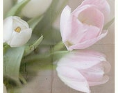 Valentine, Photography, Fine Art Photography, Home Decor, Wall Art, Spring Tulips, Pink, White, Shabby Chic,  Country, Print