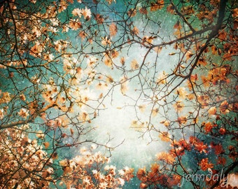 Supernova - fine art photograph, tree photography, surreal sky, universe, celestial, aqua, abstract sky photograph, magnolia trees