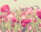 pink decor flower photography poppy field farmhouse / 12x12 Fine Art Photograph / red yellow green
