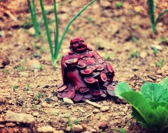Garden Buddha (8x10 Color Photo)