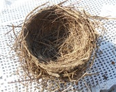 Real bird nest  Found bird nest  Northern Missouri nest  Natural bird nest Mud grass weeds Wreath decoration Photo prop J15