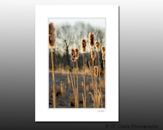 Cattail Nature Photography Print, Landscape image, Brown decor, Signed Matted Print fits 5x7 inch frame