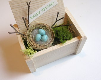 Nature gift, spring decor, bird nest, robin eggs