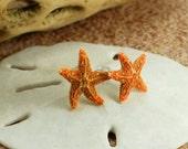 """Starfish Stud Earrings, Mermaid Stud Earrings, Beach Studs, Real Starfish Earrings, Tiny Starfish,  5/8 to 1"""" in Diameter, Small Shell Studs"""