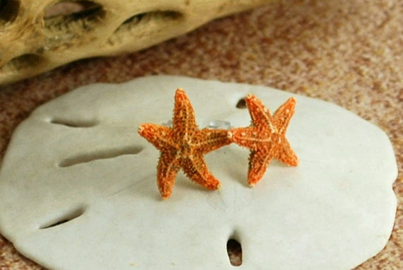 items similar to real sugar starfish post stud earrings